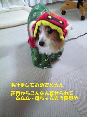 シシマイ1